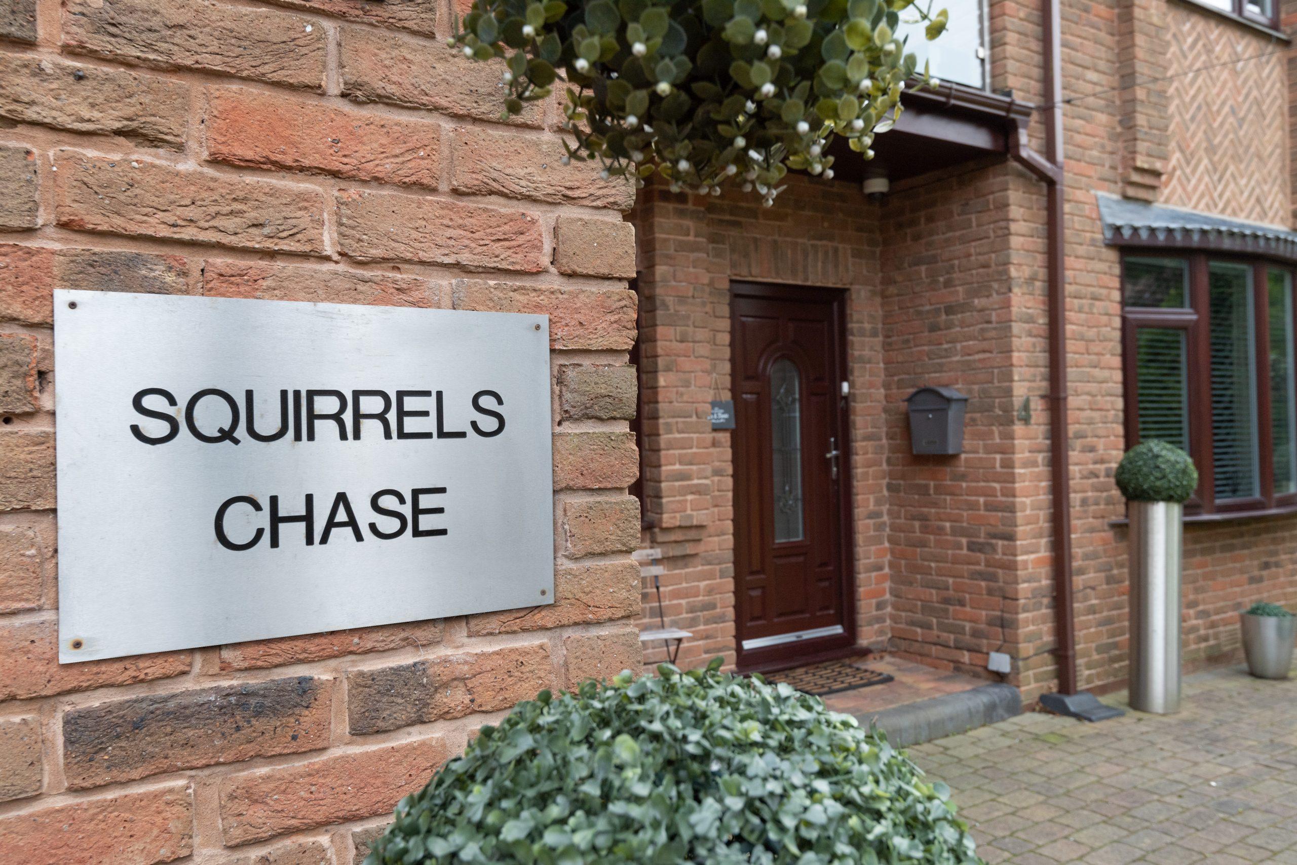 Squirrels Chase